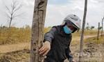 """Gia Lai: Cao su """"chết yểu"""" tại dự án chuyển đổi rừng nghèo"""