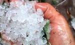 Mưa đá gần bằng đầu ngón tay gây thiệt hại nhiều vườn sâm Ngọc Linh