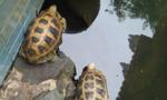 Giải cứu 157 cá thể hoang dã bị buôn bán trên internet