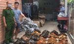 Lãnh án nặng vì buôn bán hàng chục tiêu bản động vật quý hiếm