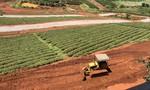 Lâm Đồng: Tạm dừng phân lô tách thửa, xử lý nhiều cán bộ vi phạm