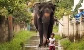 Clip bé gái ở Ấn Độ chăm sóc voi như... thú cưng
