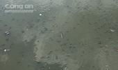 Hàng triệu con cá nổi dày đặc trên kênh Nhiêu Lộc - Thị Nghè