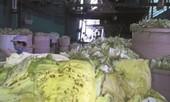 Chế biến cải bắc thảo bằng cải phế thải và phụ gia nguy hiểm ở Sài Gòn