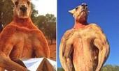 Chú chuột túi 'cơ bắp' nổi tiếng thế giới, qua đời ở tuổi 12