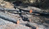 """10 héc ta rừng cách chốt bảo vệ chỉ 1km """"biến mất"""""""