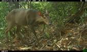 Lần đầu tiên phát hiện cá thể mang lớn ở Quảng Nam