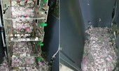 Chuột cắn nát 17.600 USD trong máy ATM