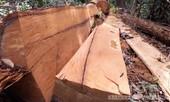 Lập chuyên án điều tra vụ phá rừng Đăk Ruồng