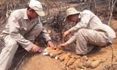 Phát hiện gần 100 quả đạn pháo cối trong rẫy chuối