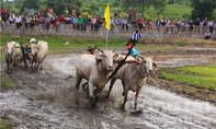 Hàng ngàn người về Bảy Núi xem đua bò
