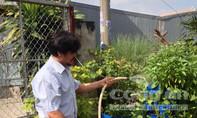Hốt bạc nhờ trồng rau sạch từ rác thải sinh hoạt giữa Sài Gòn