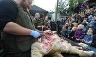 Vườn thú Đan Mạch công khai xẻ thịt sư tử