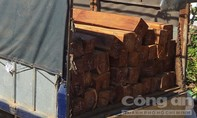Bắt vụ vận chuyển gỗ căm xe lậu với khối lượng lớn
