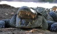 Indonesia dùng cá sấu ngăn tử tù vượt ngục