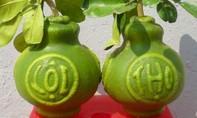 Hàng trăm quả bưởi in hình Hoàng Sa, Trường Sa đón Tết