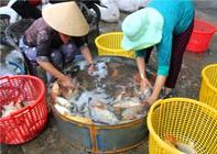 Đi chợ bán cá rẻ… như rau