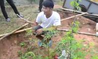 Con nghiện trồng 16 cây cần sa trong vườn để sử dụng