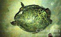 Thả rùa biển quý hiếm nặng 25kg về với biển