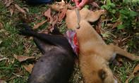 Hai vợ chồng rủ nhau đi trộm chó bị bắt quả tang