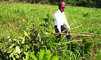UBND tỉnh Thanh Hoá yêu cầu làm rõ vụ 1.500 cây cao su của dân bị chặt phá