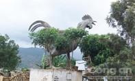 Tìm gà 9 cựa ở làng K' Long