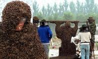 """Lập kỷ lục thế giới với """"tấm chăn"""" tạo thành từ 1 triệu con ong"""