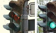 Trụ đèn tín hiệu bị ong bao vây