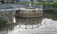 Kênh Nhiêu Lộc - Thị Nghè mới 'xanh hóa' đã ô nhiễm trầm trọng