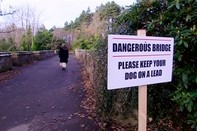 Bí ẩn 600 con chó nhảy cầu tự tử