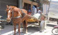 Ngựa kéo thuê kiếm tiền triệu cho gia chủ