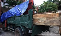 Điều tra Hạt trưởng hạt Kiểm lâm khai thác, buôn gỗ lậu