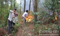 Cháy rừng thông ở hai huyện Nam Đàn và Hưng Nguyên