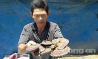 Lùng mua loại nấm không ăn được