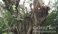 Người đàn ông bị điện giật dính vào cành cây tử vong