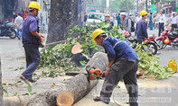 Kiểm điểm, giáng chức nhiều cán bộ trong vụ chặt cây xanh ở Hà Nội