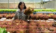 Kiếm bạc tỷ nhờ vườn rau thủy canh công nghệ Châu Âu