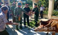 Tặng 203 con bò giống cho người nghèo nơi biên giới