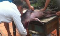 Ăn tiết canh lợn, người đàn ông bị viêm màng não mủ
