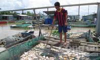 Nông dân khóc ròng vì cá chết hàng loạt