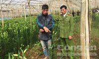 Lâm Đồng: Bắt quả tang hai kẻ trộm hoa lily