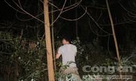 Đêm khuya tiếp tục truy lùng tên cướp lẩn trốn trong rừng