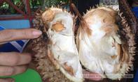Sầu riêng tiêm hóa chất ép chín bày bán tràn lan