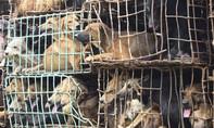 Khoảng 5 triệu chú chó bị sát hại để làm thức ăn, mồi nhậu mỗi năm