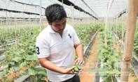 Hốt bạc tỷ nhờ đam mê nông sản tí hon