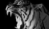 Hổ trắng cắn đứt lìa cánh tay nữ du khách
