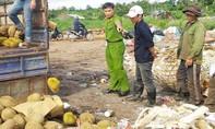 Tiêu hủy gần 1.400kg sầu riêng nhúng hóa chất