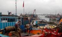 Ngư dân Quảng Nam ra khơi đánh bắt hải sản đầu năm ở Hoàng Sa, Trường Sa