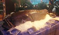 """Cá mú nghệ """"khổng lồ"""", dài hơn 2m về TP.HCM"""