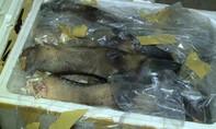 Phát hiện hơn 600kg chân, đuôi bò bốc mùi hôi thối trên xe khách